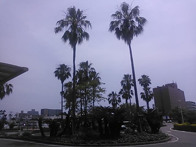 はるばる来たぜ、宮崎市